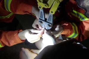 贵港:三岁女孩玩垫片手指被卡 消防员巧妙