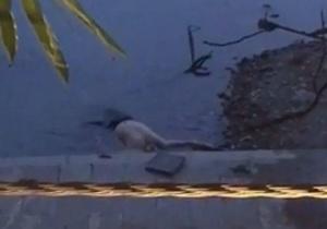 桂林臨江路附近發現一具男尸 上半身赤裸(組圖)