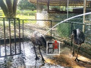 """高温来袭 桂林市动物园开避暑""""凉方"""""""