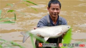 博白浪平:麻竹、草鱼卖得俏 这些产品为啥不一样