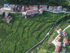 陕西安康:绿色经济迈阔步 生态发展后劲足