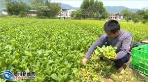 賀州:打造現代生態農業 農業產業提質增效