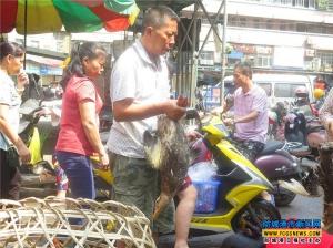 防城港:中元節活鴨銷售旺