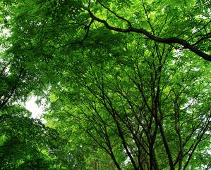 梧州市獲中央增量下達生態護林員補助770萬元
