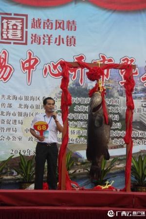 """""""头鱼拍卖会""""上 北海91公斤""""鱼王""""拍出70万元"""