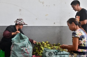 【政协八桂行】桂林政协委员积极履职助贫困户摘穷帽