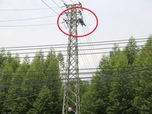 8月23日焦点图:男子上高压电塔摘蜂窝被电流击穿