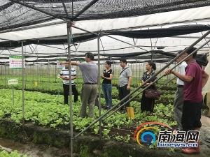 海南夏秋设施渡淡蔬菜生产推出一批新技术新品种