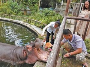 """9月12日焦点图:动物吃特制月饼过别样""""中秋节"""""""