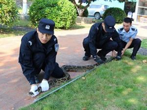 2.5米长的蟒蛇盘踞垃圾桶内,吓坏村民!事发防城港