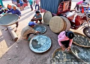 邕宁区:免费发放秋蚕苗激发脱贫产业动能