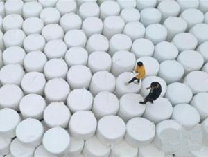 河北唐山:青贮玉米收获忙