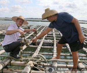 农行合浦西场支行支持特色养殖业发展