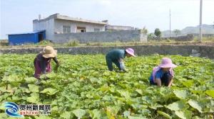 贺州:大力发展农村电子商务促进农产品流通现代化