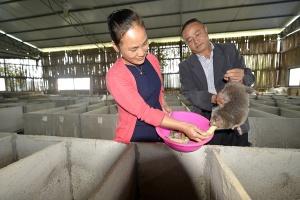 广西三江:竹鼠养殖助脱贫