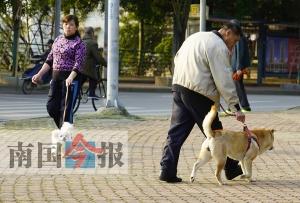 养狗文明到底谁来管?文明养犬法规遭遇执行难
