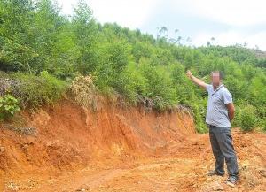 南宁:无证采伐林木1.56公顷 嫌犯投案自首(图)