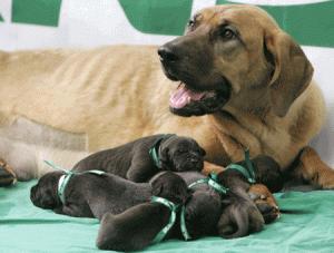 """<b>南宁一宠物医院声称花25万元可""""克隆""""宠物</b>"""