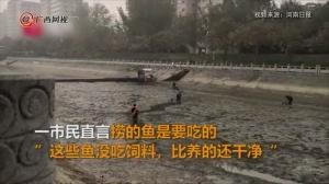 水渠抽水清淤 市民浑水捞鱼近百斤