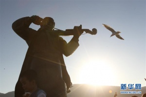 云南昆明:红嘴鸥迁徙过冬