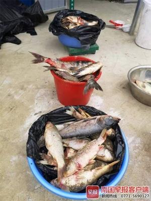 鱼塘即将开钓经营,水里却惊现农药瓶 死鱼一大片