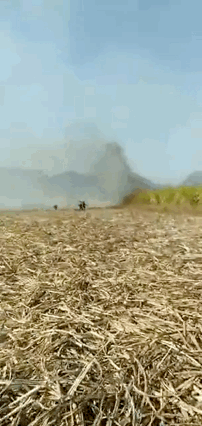 来宾一甘蔗地失火400亩甘蔗受损 派出所:立案侦查