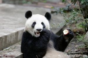 看大熊猫去!