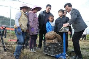 """河池环江""""魔芋""""丰收测产 单个最大10.35公斤"""