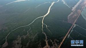 高清组图:航拍广西廉州湾冬景