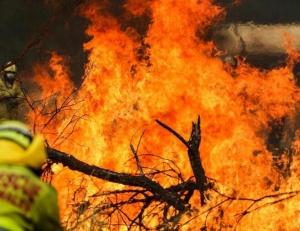 综述:澳大利亚林火肆虐 将设新机构救灾