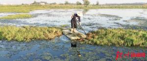 解救候鸟|有人在犀牛脚镇沙角村委三墩村海堤拉网非法捕鸟!