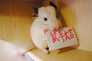"高清:�R�q萌物上� ""鼠""你最吉祥"