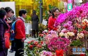 北京:年宵花展迎春节
