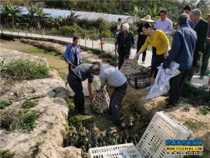 雁鹅养殖基地向贫困户发放雁鹅苗