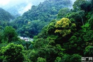云南林草高质量发展 国土绿化树起绿色丰碑