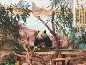 高清:南宁动物园大熊猫