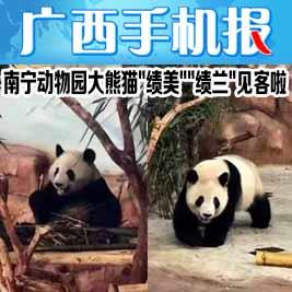广西手机报1月15日
