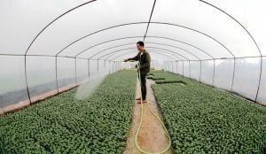 扶绥县山圩镇群众正在为甘蔗地间套种西瓜做准备