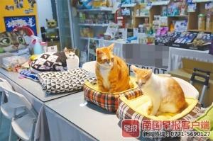 南宁春节寄养宠物价格大型犬费用每天可高达200元