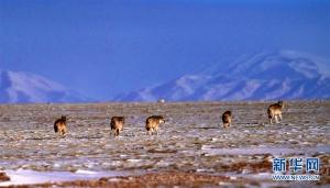 第二次青藏高原科考成果表明三江源生态持续向好