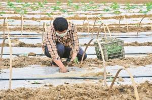 渠黎镇:春耕生产和疫情防控两不误