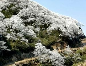 冷空气持续影响广西 17日桂北或有冰冻及霜冻