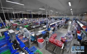 海南水产出口企业陆续复工复产