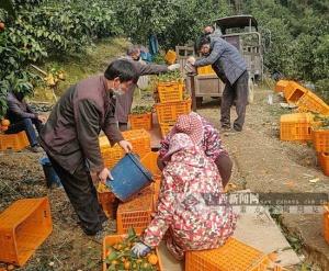 """环江采取""""三力三通""""措施有效破解农产品滞销难题"""
