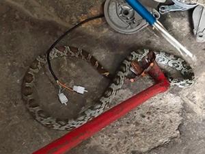 3月2日焦点图:惊!柳州一维修店钻进一条红头蛇