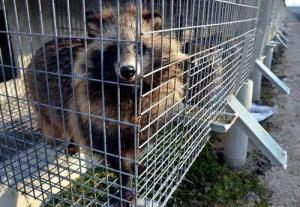 众发娱乐平台下载:举报非法经营野生动物 市民最高获1万元奖励