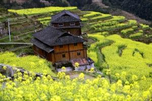 龙胜:漫山鲜花盛开村寨披盛装(组图)