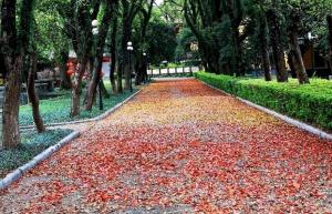 3月10日焦点图:桂林落叶美如画 街道铺鲜艳