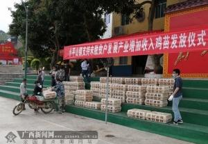 玉林兴业小平山镇:发放鸡苗助力未脱贫户发展产业