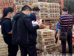 """浦北县驻石凉村第一书记 为村里产业打造""""新名片"""""""